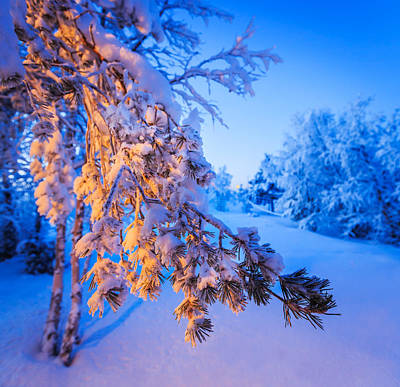 Snow Covered Trees In Extreme Cold Poster