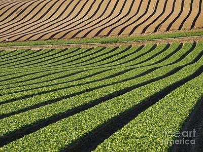 Spinach Crop Poster by Adrian Bicker