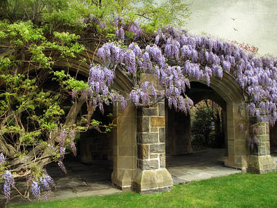 Spring Wisteria Poster