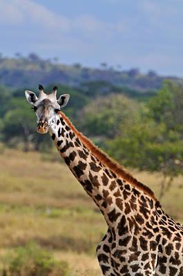 Tarangire Giraffe Poster