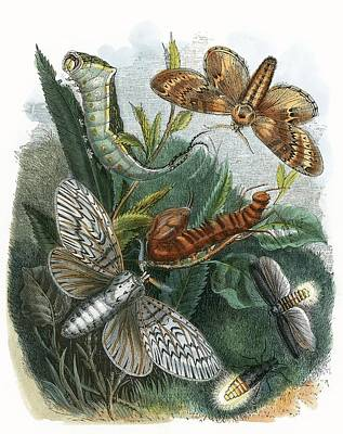 The Butterfly Vivarium Poster