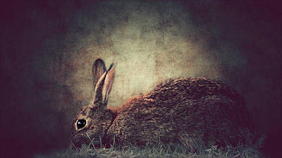 The Rabbit Poster by Heike Hultsch