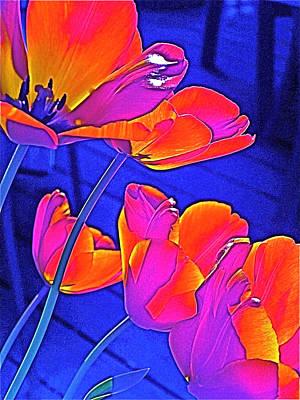 Tulip 4 Poster by Pamela Cooper