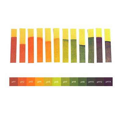 Universal Indicator Paper Poster by Science Photo Library