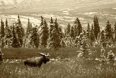 Usa, Alaska, Denali National Park Poster