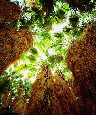 Usa, California, Anza-borrego Desert Poster
