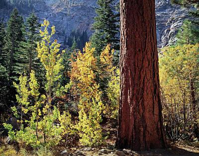 Usa, California, Sierra Nevada Poster by Christopher Talbot Frank