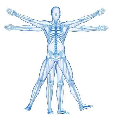 Vitruvian Man Skeleton Poster