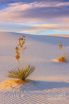 White Sands National Monument Poster by Henk Meijer Photography