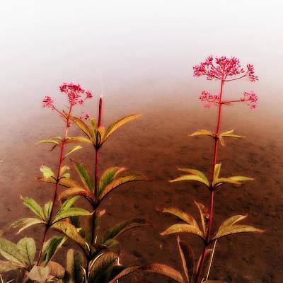 Wildflowers On Spruce Knob Lake Poster