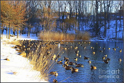 Winter By The Lake Poster by Dora Sofia Caputo Photographic Art and Design
