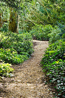 Woodland Path Poster by Tom Gowanlock