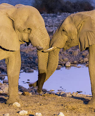 Africa, Namibia, Etosha National Park Poster by Jaynes Gallery