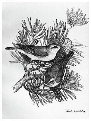 Blackburn Birds, 1895 Poster