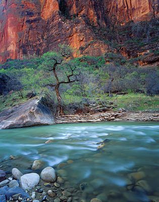 Zion National Park, Utah Poster