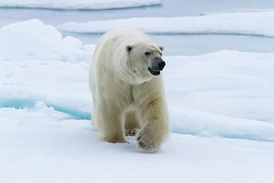 Norway, Svalbard Poster