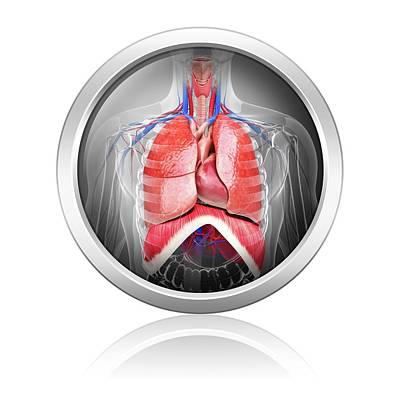 Human Respiratory System Poster