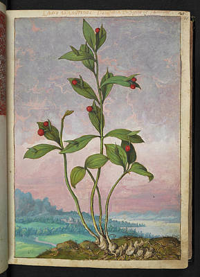 Medicinal Plant Poster by British Library