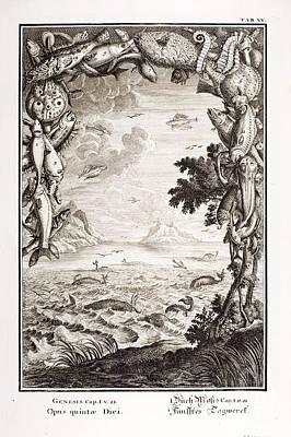5th Day Of Creation, Scheuchzer, 1731 Poster