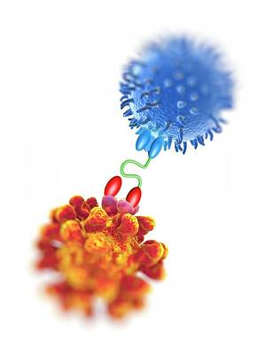 Antibody Acting Against Tumour Cell Poster