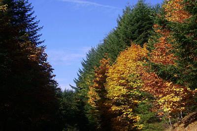 Autumn 9 Poster
