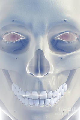 Bones Of The Face Poster by Science Picture Co