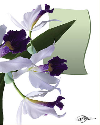 Cattleya Valentine Triage Dafoi Art 1 Of 3  Poster by Ruth  Benoit