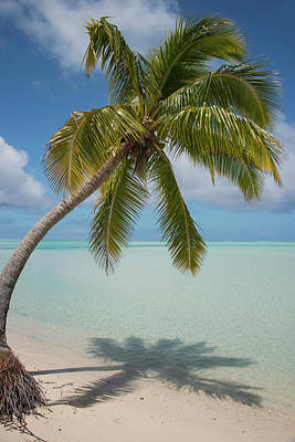 Cook Islands, Aitutaki (aka Araura Poster by Cindy Miller Hopkins