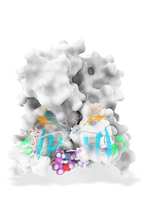 Daclatasvir And Ns5a Protein Complex Poster
