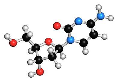 Deoxycytidine Nucleoside Molecule Poster