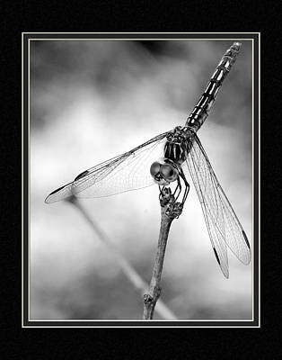 Dragonfly Close-up II Poster