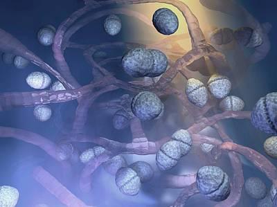 Enterococcus Bacteria Poster