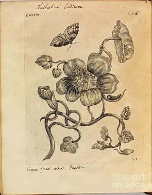 Erucarum Ortus Poster