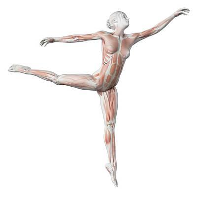 Female Dancer Poster by Sebastian Kaulitzki