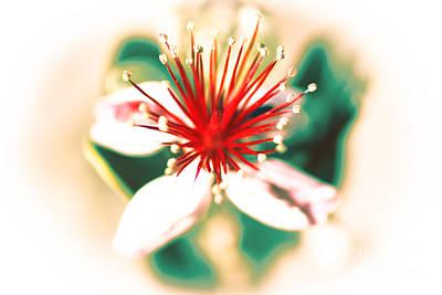 Poster featuring the photograph Flower by Gunter Nezhoda
