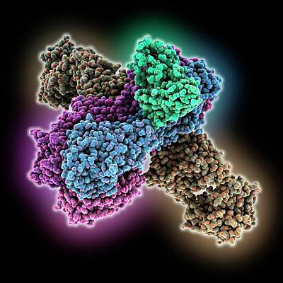 Haemagglutinin Viral Surface Protein Poster