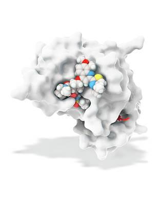 Hepatitis C Drug Bound To Enzyme Poster