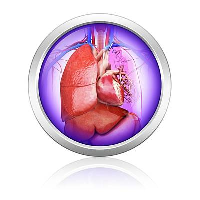 Human Lungs And Heart Poster by Pixologicstudio