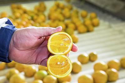 Orange Farming Poster by Jim West