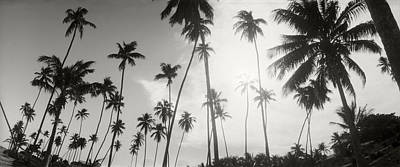 Palm Trees On The Beach, Morro De Sao Poster by Panoramic Images