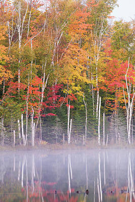 Reflection Of Trees In A Lake Poster by Panoramic Images