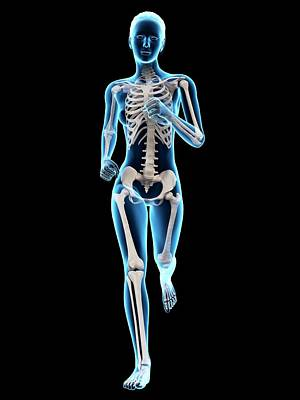 Skeletal System Of A Runner Poster by Sebastian Kaulitzki