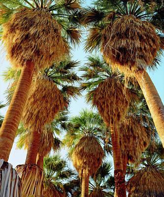 Usa, California, Anza-borrego Desert Poster by Jaynes Gallery