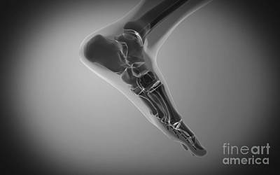 X-ray View Of Human Foot Poster by Stocktrek Images