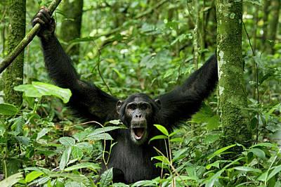 Africa, Uganda, Kibale National Park Poster