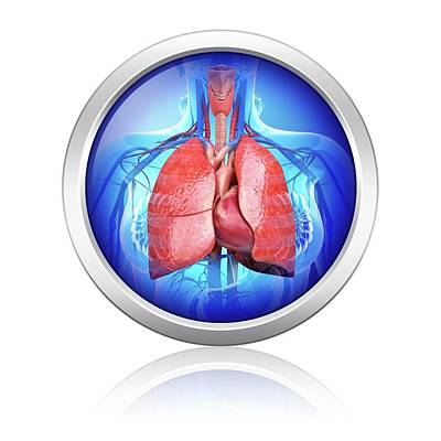 Human Respiratory System Poster by Pixologicstudio