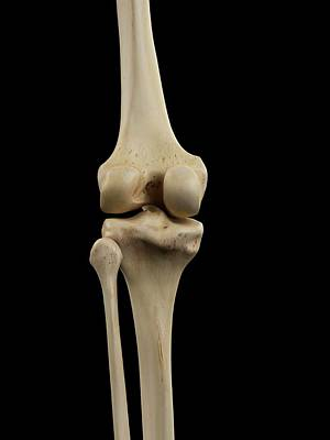Human Knee Joint Poster