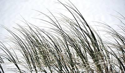 Dune Grass Poster by Werner Lehmann