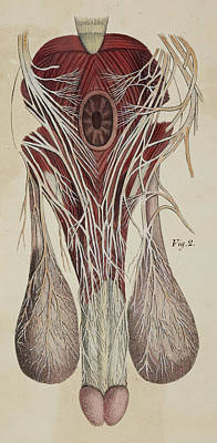 Anatomical Drawing Poster