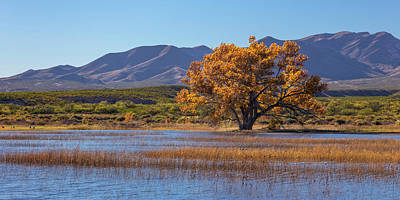 Usa, New Mexico, Bosque Del Apache Poster